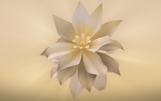 Desert Flower Foundation